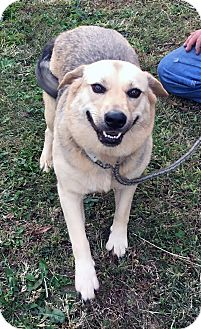 Husky Mix Dog for adoption in Loogootee, Indiana - Sadie