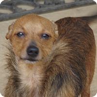 Adopt A Pet :: Trinity - Marshall, TX