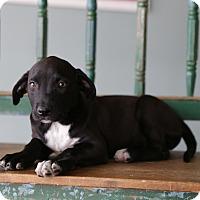Adopt A Pet :: Selah - San Antonio, TX