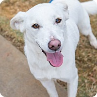 Adopt A Pet :: Lacey - Boonsboro, MD