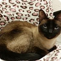 Adopt A Pet :: Lydie - Sarasota, FL