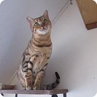 Adopt A Pet :: Electra - Davis, CA