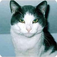 Adopt A Pet :: Gulliver - Medway, MA