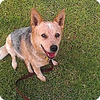 Adopt A Pet :: Tibby - Phoenix, AZ