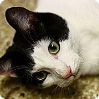 Adopt A Pet :: Jackson - Lombard, IL