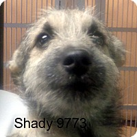 Adopt A Pet :: Shady - baltimore, MD