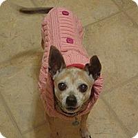 Adopt A Pet :: Dotty - Marcellus, MI