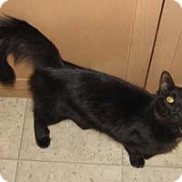 Adopt A Pet :: Cher - Merrifield, VA