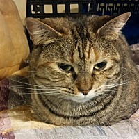 Adopt A Pet :: Millie - Middletown, CT