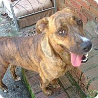 Adopt A Pet :: Gabby - Lebanon, ME