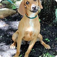 Adopt A Pet :: Ruby - Mount Laurel, NJ