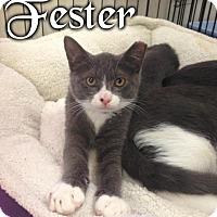 Adopt A Pet :: Fester - River Edge, NJ