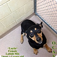 Adopt A Pet :: 2-4 Layla - Triadelphia, WV
