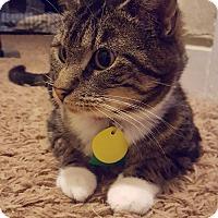 Adopt A Pet :: Mama~Adoption Pending - Davenport, IA