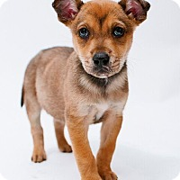 Adopt A Pet :: Mac - Austin, TX