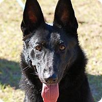 Adopt A Pet :: Duchess - Preston, CT