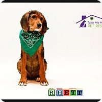 Adopt A Pet :: Rhett - Richardson, TX