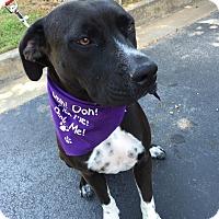 Adopt A Pet :: Roxy - Atlanta, GA
