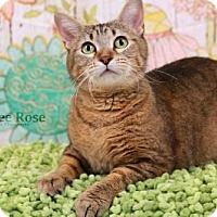 Adopt A Pet :: Sissy - Sterling Heights, MI