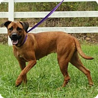 Adopt A Pet :: Scarlett - Chalfont, PA
