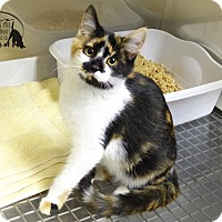 Adopt A Pet :: Kylee - Marlinton, WV