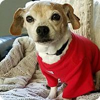 Adopt A Pet :: Freddy - Clayton, CA