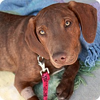 Adopt A Pet :: Jane - Youngsville, NC