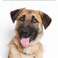 Adopt A Pet :: Chestnut - San Luis Obispo, CA