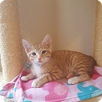 Adopt A Pet :: Jake - Brandon, FL