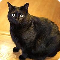 Adopt A Pet :: Ophelia - Winston-Salem, NC