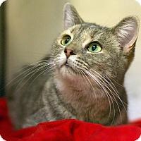 Adopt A Pet :: Sarah - Troy, MI