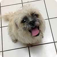 Adopt A Pet :: CASSIE - Colton, CA