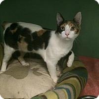 Adopt A Pet :: Mollie - Philadelphia, PA