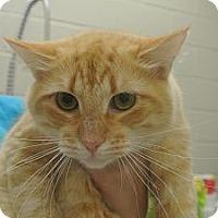 Adopt A Pet :: Cledance - white settlment, TX