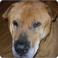 Adopt A Pet :: Floyd Sr. - Newport, VT