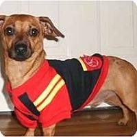 Adopt A Pet :: Ralph - Mooy, AL
