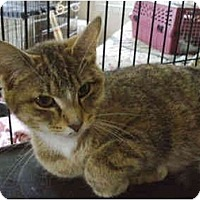 Adopt A Pet :: Butterscotch - Colmar, PA