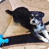 Adopt A Pet :: RASCAL (SRC#1602) IN SC--RETIRED TO FOSTER HOME - Lenoir, NC