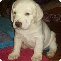Adopt A Pet :: Rey - Marlton, NJ