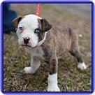 Adopt A Pet :: Blue (POM-CD)