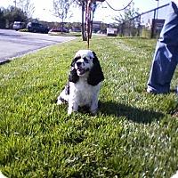 Adopt A Pet :: Charlie  -Adopted! - Kannapolis, NC