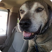 Hound (Unknown Type) Mix Dog for adoption in Malabar, Florida - Roger
