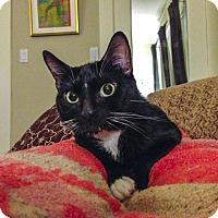 Adopt A Pet :: Dexter - Oakland, CA