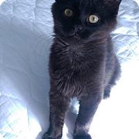 Adopt A Pet :: Oceanus - Mount Laurel, NJ