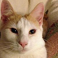 Adopt A Pet :: Tygarian - Durham, NC