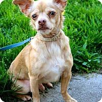 Adopt A Pet :: Oliver - Grand Rapids, MI