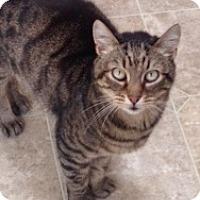 Adopt A Pet :: Jack and Sofia - Novato, CA