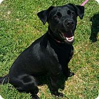 Adopt A Pet :: Jade - Lisbon, OH