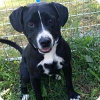 Adopt A Pet :: Skipper - Baltimore, MD