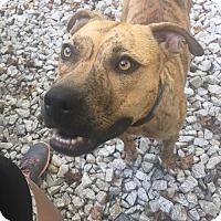 Adopt A Pet :: Finchie - Southbury, CT